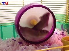 première vidéo de hamster
