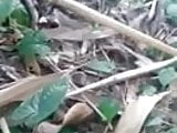 indian aunty getting fucked by young guys in forest