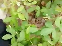 Telugu Aunty Outdoor Romp Video