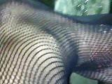 Pissing & Walking in Fishnet Catsuit