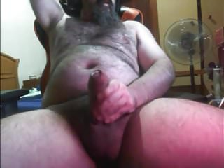 Bearded bear fat...